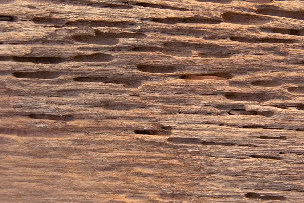 Tratamiento termitas 3
