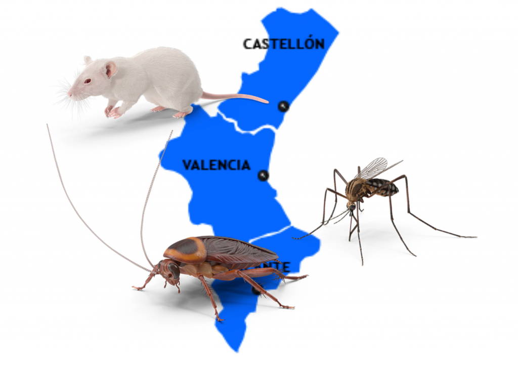 plagas en la comunidad valenciana