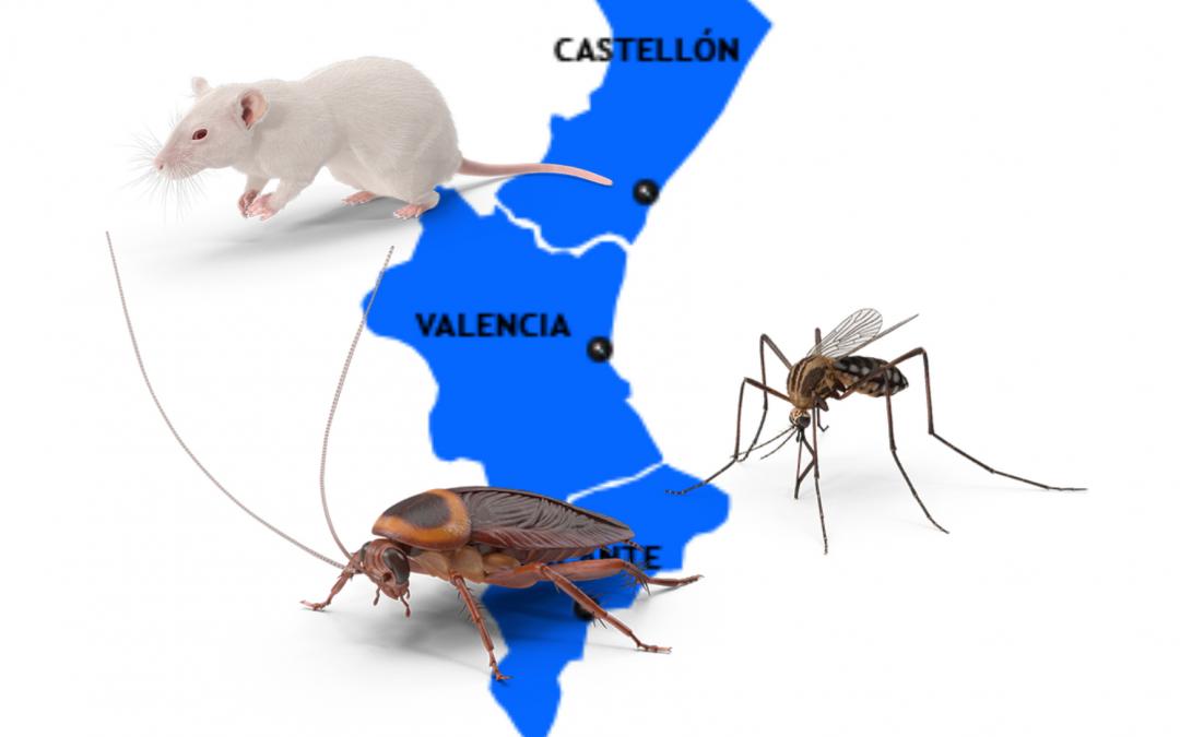 Enfrentarse a las plagas más comunes de la de la Comunidad Valenciana