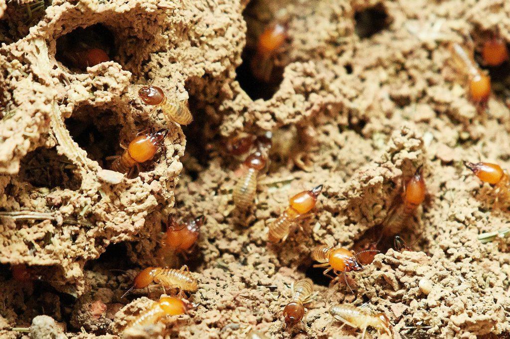 tratamientos para las termitas