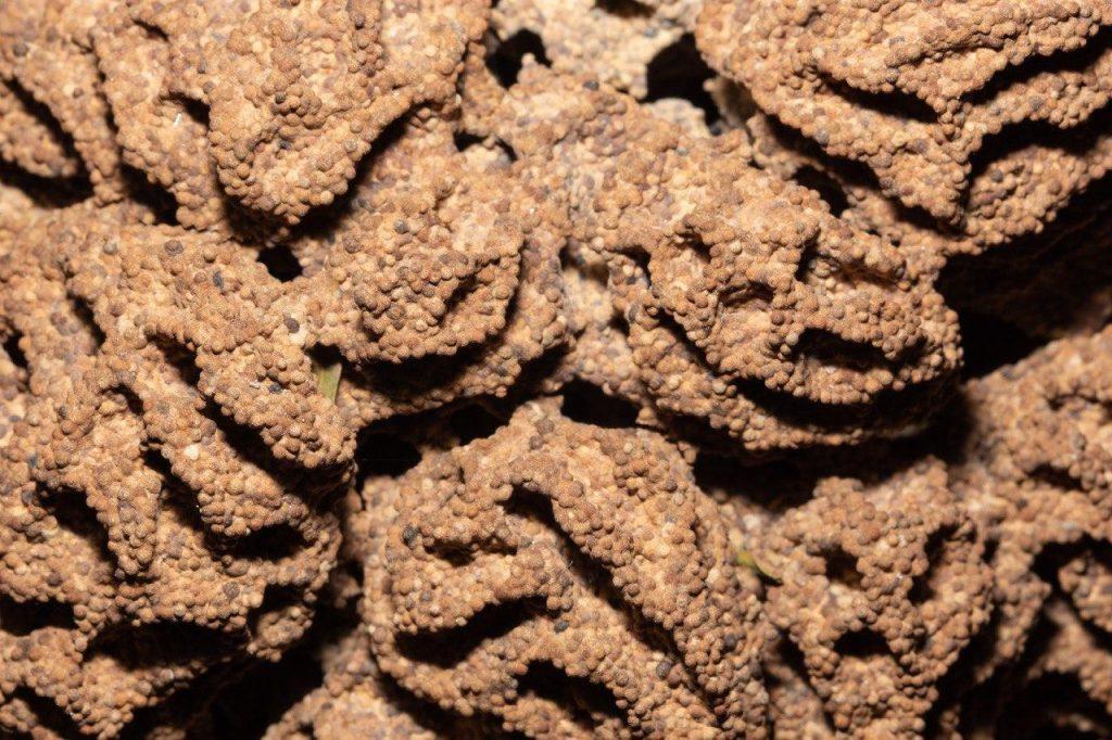 tratamiento-para-las-termitas